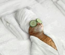 internet-meme-of-cat-at-spa-with-cucumbers-on-eyes-and-wearing-a-bath-robe